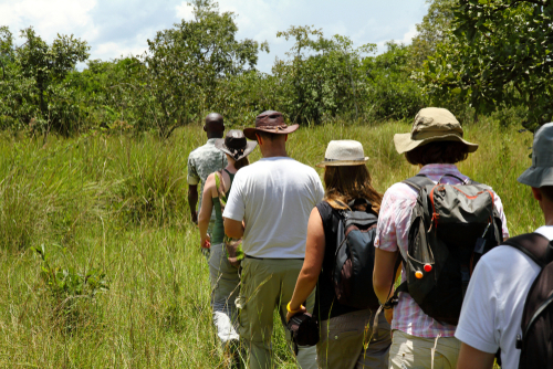 Rain forest trip with a guide