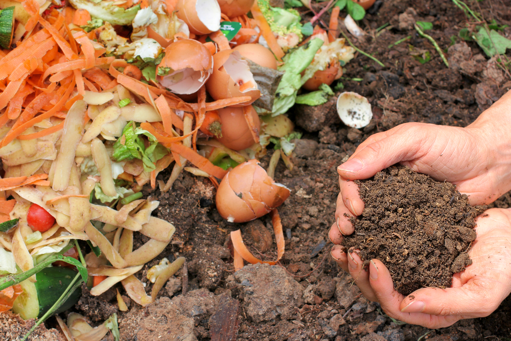 kitchen waste being used for composting